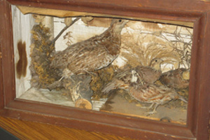 """We lovingly call this donation the """"diorama of death"""". There are four real birds in this bad boy!"""